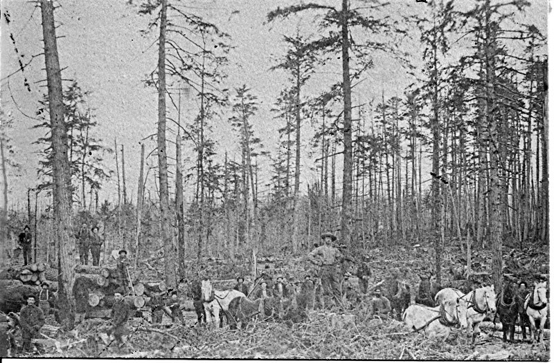 Men and Horses at a Timber Harvesting Site